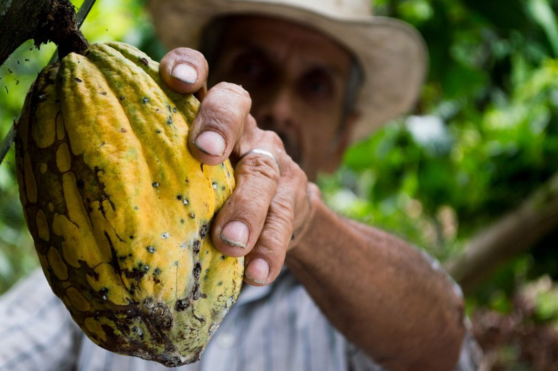Biggest cocoa harvest in decade spurs record debt sale